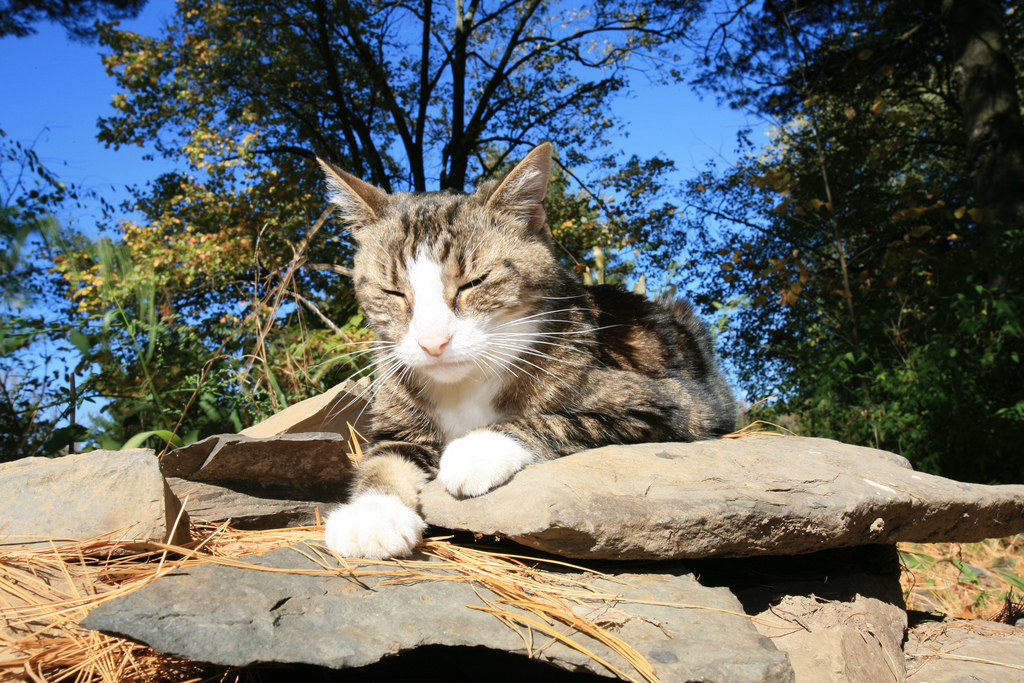 This cat is a serious meditator. Photo by Alan Turkus, via Flickr Creative Commons